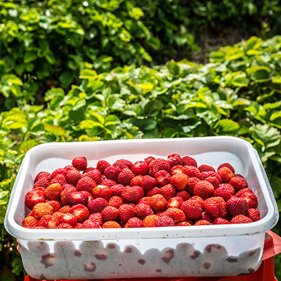 Jordbær 4kg bakk